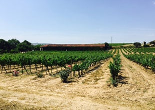 Spanish Wine Tour 2015 - Day 2, Friday 29 May