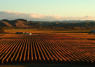 2 NZ wines make World Top 20 Wines of 2014
